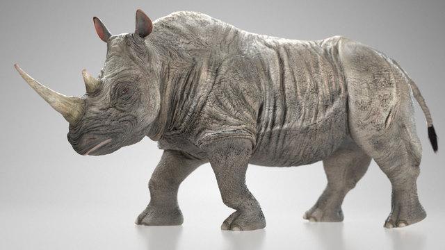 rhinoviz01