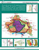 GIS Mapping Services