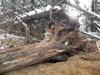 cedar trunk table