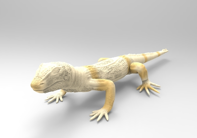 lizard in mudbox